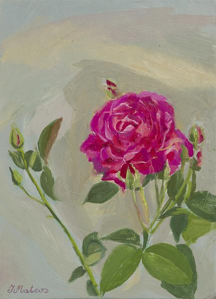 Rosas 5